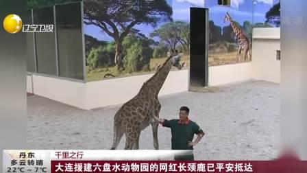 第一时间 辽宁卫视 2019 大连援建六盘水动物园的网红长颈鹿已平安抵达