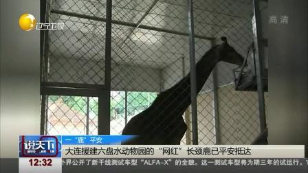 """说天下 2019 大连援建六盘水动物园的 """"网红""""长颈鹿已平安抵达"""