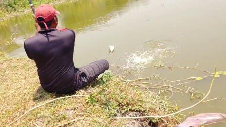 郊外河里的鱼儿都饿疯了,小哥早上出来钓几杆,鱼儿纷纷上钩