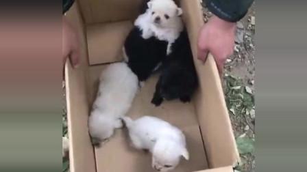 中华田园犬:美女在树林里发现一窝流浪小奶狗, 要不要把它们都带回家!