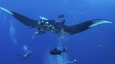 深海摄影师偶遇魔鬼鱼蝠鲼 一人一鱼相处甚欢