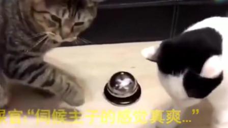 猫咪成精了,连点餐服务都会叫了!