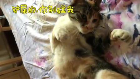 """又懒又胖,这就是我家的橘化""""猫咪"""""""