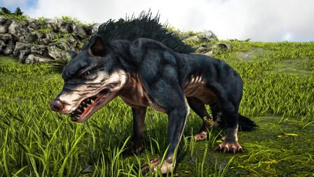 【暗墨】拥有一身腹肌的饿狼 方舟生存进化盖亚 39