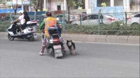 现实版忠犬八公!环卫大姐收养流浪狗,半年来它每天守车报恩