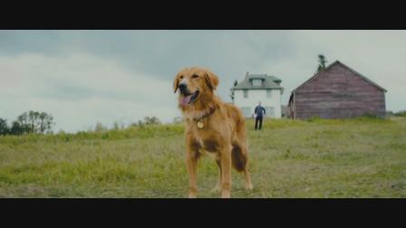 怕是又要哭成狗 《一条狗的使命2》预告来了