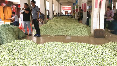 这种花十多块一斤,农民一天赚好几百,高兴坏了!