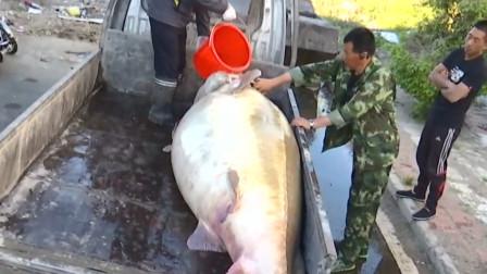 """这种鱼没有天敌,已存活1亿年,却还是败在了""""我国吃货""""的嘴里"""
