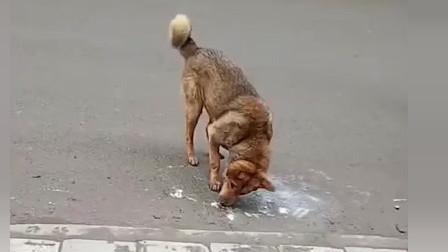 中华田园犬:这地方真不错,我来蹭蹭痒!