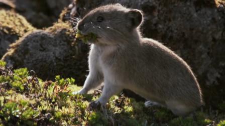 这种动物20年后重新出现,比大熊猫还珍贵,科学家:并不是好事