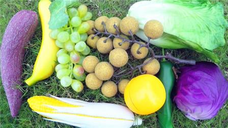小马识果蔬 认识桂圆等9种水果蔬菜