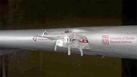 无人机和鸟撞飞机后谁破坏性更大?老外实验,结果很意外!