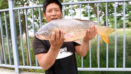 小伙野河撒网,捕获今年最大巨物,两个人一块才把它弄上岸!