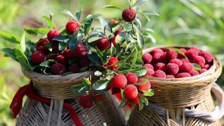 什么水果冷冻才好吃?杨梅必须有姓名,孩子都爱吃