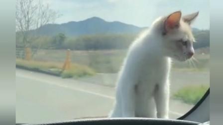 猫咪:哎呦妈呀,这下完了,睡过头了,这是要去哪儿呢?