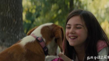 听哭了!刘宪华献唱《一条狗的使命2》推广曲《当你孤单你会想起谁》