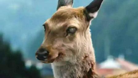 """美国频繁出现""""丧尸鹿"""",生化危机要来了?专家透露出实情"""