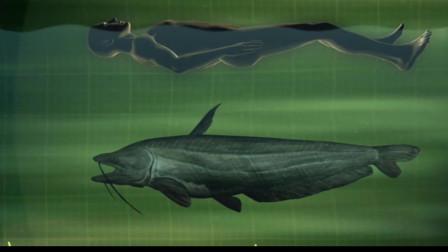 这样温顺的鱼居然会主动攻击人类?许多人因此不敢过河