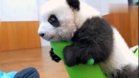 熊猫:看完之后我居然想养熊猫了,太萌了!