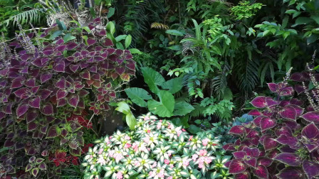 植物园游玩视频 天上人间多种特别的花朵