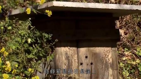 """神农架林区是中国第五个国家级中华蜜蜂保护区,""""崖壁蜂箱""""成为独特景观"""
