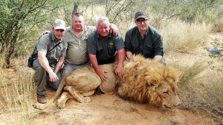 非洲的黑暗捕猎场,给钱就能在农场猎杀狮子!