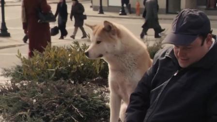 52万人评分9.2的感人电影,《忠犬八公的故事》太催泪了-忠犬八公