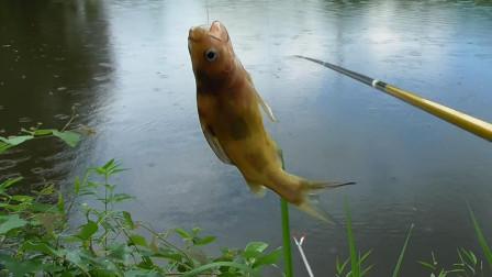 野钓上鱼最快的时候,下杆连续3次双钩中鱼,这野钓资源爽吧!