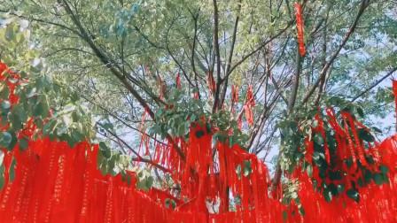 许愿树送给大家,看到的朋友都心想事成!