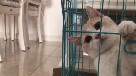 在笼子里卖萌想出来玩的小猫咪,好可爱