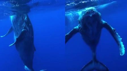 奇遇 摄影师海底偶遇巨型30米蓝鲸称其像潜艇