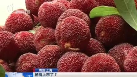 上海早晨 2019 杨梅上市了?别急  最好吃的仙居东魁杨梅要6月15日开吃