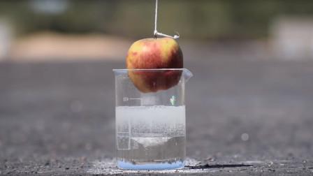 将苹果放进100%浓硫酸中,你猜结果会怎样?睁大眼睛看仔细!