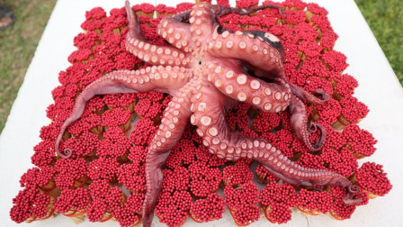 奇趣实验:老外用10000根火柴烤章鱼,你猜能烤熟吗?
