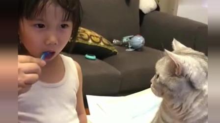 猫咪对小主人真是不离不弃,刷牙也要看着,像是自己的孩子似的