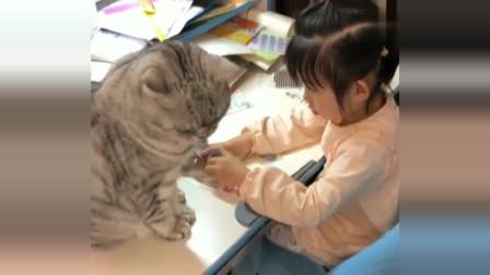 我都没玩过猫咪的尾巴,猫咪却让小女儿玩,没有对比就没有伤害