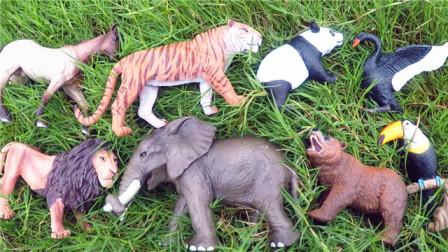小马识动物 认识大老虎等8种陆地动物