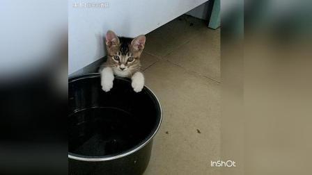 猫咪宝贝儿、这是 告诉麻麻淫家没粮食了[飞吻][飞吻][图片评论