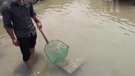 大叔带老婆赶海抽大坑,发现大货直接往水里扑,抓的太刺激了!