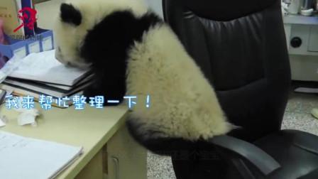 """饲养员一片好心,破例把大熊猫带回办公室,结果却""""引狼入室"""""""