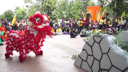 2019传统舞狮比赛,双威忠胜醒狮团表演,好厉害