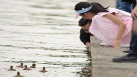 西湖鸳鸯被游客抓伤死亡 男游客:我就是拿来玩玩