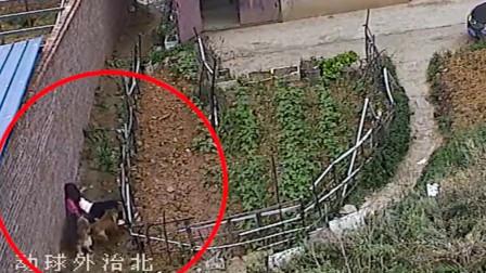 贵州16岁女孩放学途中 遭三条恶犬扑咬