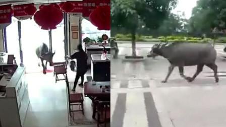 """广西一街头闯入疯牛 撞人撞车""""战果累累"""""""