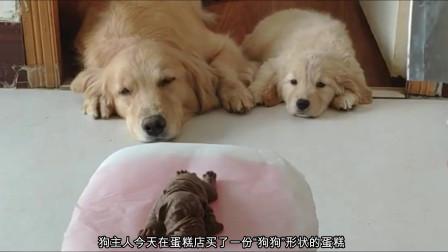 """主人恶搞狗狗,当着狗狗的面切""""狗形""""蛋糕,狗狗撒腿就溜"""