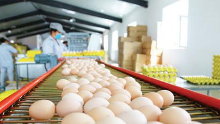 工厂生产鸡蛋,不是母鸡直接下的吗?看完过程后恍然大悟!