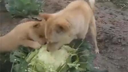 狗妈妈:孩子,快吃,吃素身体好!
