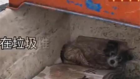 狗狗被抛弃在垃圾堆,依然保留着清澈的眼神!