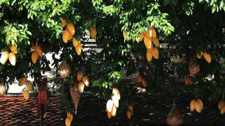 芒果凭啥比其他水果贵?种得好三年才结果,种得不好结了果也会落