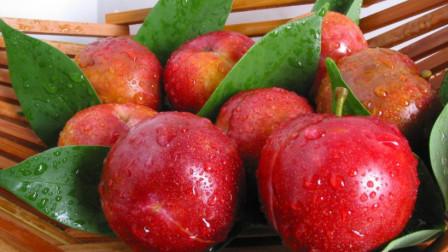"""古人称它为""""肝之果"""",5月正当季,10元买一大袋,腌一下好吃"""
